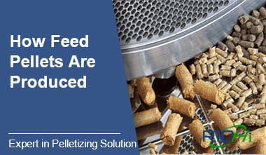 How Feed Pellet Are Produced