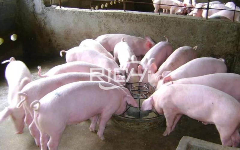 China supplier pig feed plant cost