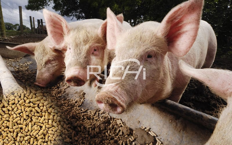 How to design the trough of a pig farm to avoid feeding troubles?