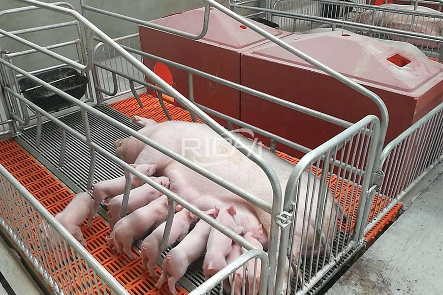 How to disinfect pig breeding equipment?