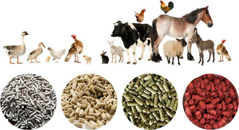 Application of animal feed additives in South Africa