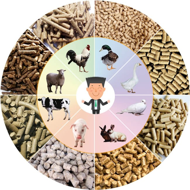 cattle feed plant cost manufacturer